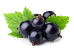 Les vertus des bourgeons de cassis - Gemmothérapie - Blog Aroma-zen